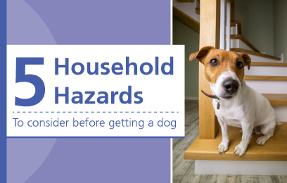 5 Household Hazards you need to consider before getting a new dog