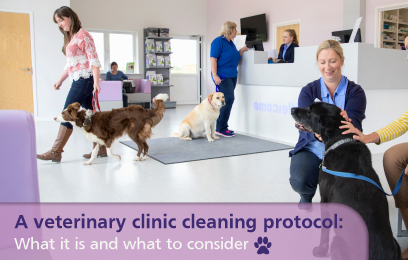 A veterinary clinic cleaning protocol: What it is and what to consider