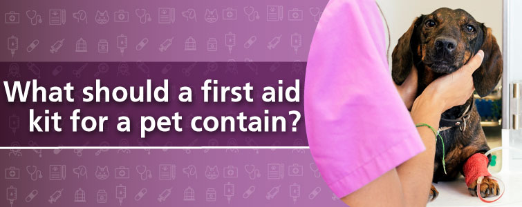 What should a first aid kit for a pet contain?