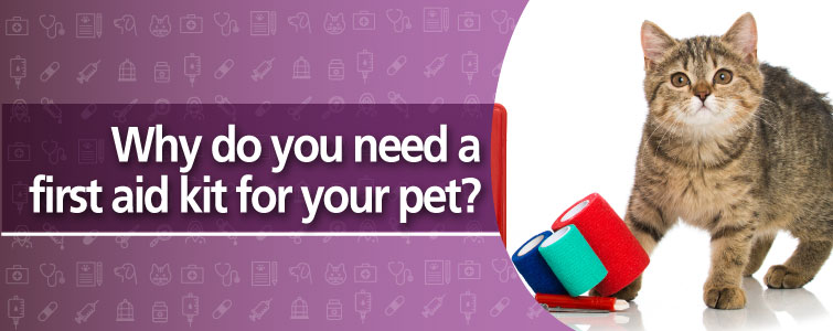 Why do you need a first aid kit for your pet?